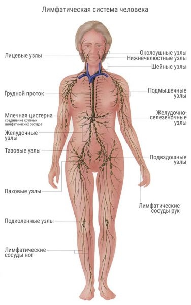 Расположение лимфоузлов
