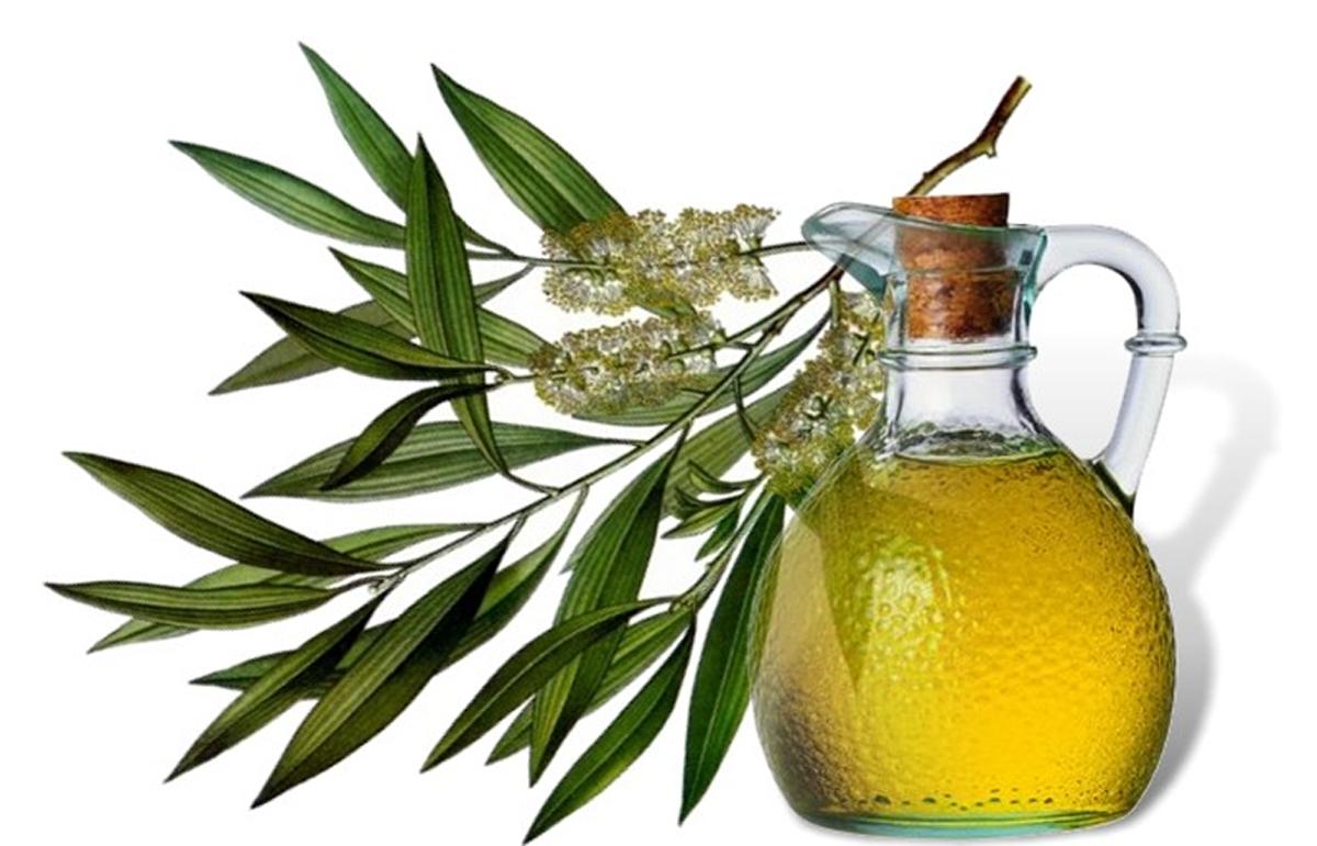 Применение масла чайного дерева в медицине и косметологии