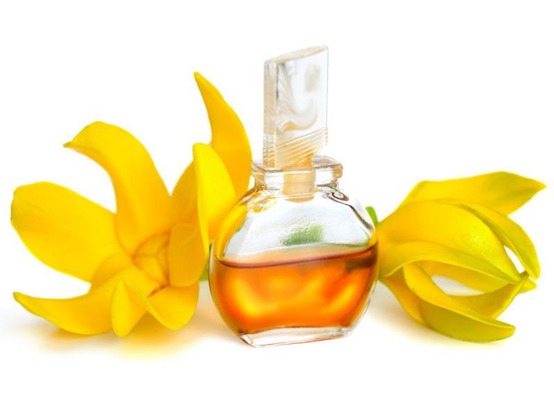 Эфирное масло иланг-иланга: применение в медицине, косметологии и любовной магии