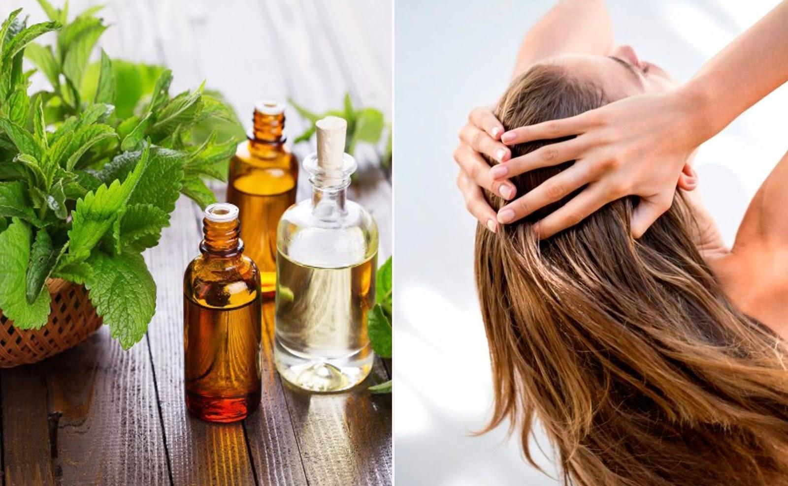 Целебная сила эфирного масла мяты для оздоровления волос