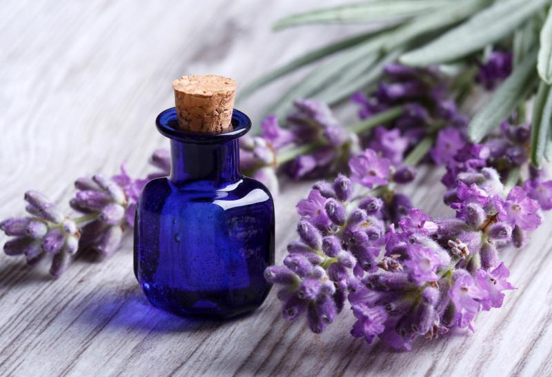 Масло лаванды: полезные свойства и применение в косметологии и медицине