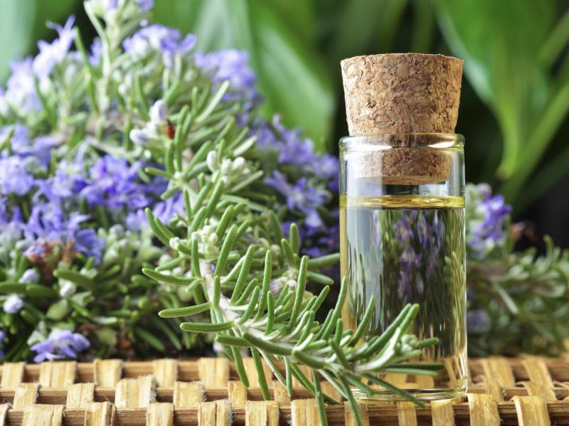 Эфирное масло розмарина: применение в медицине и косметологии