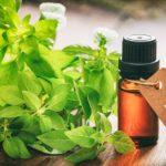 Эфирное масло базилика в тёмном флаконе и растение