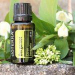 Эфирное масло бергамота в тёмном флаконе и растение