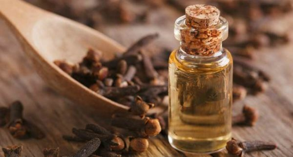 Эфирное масло гвоздики в прозрачном флаконе и растение
