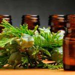 Эфирное масло кипариса в тёмных флаконах и растение