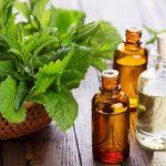 Эфирное масло мелиссы и растение