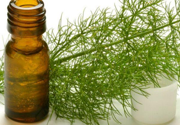 Эфирное масло укропа в тёмном флаконе и растение