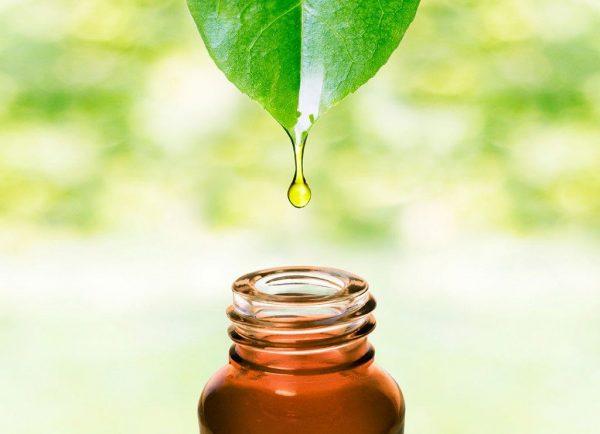 масло чайного дерева от папиллом отзывы