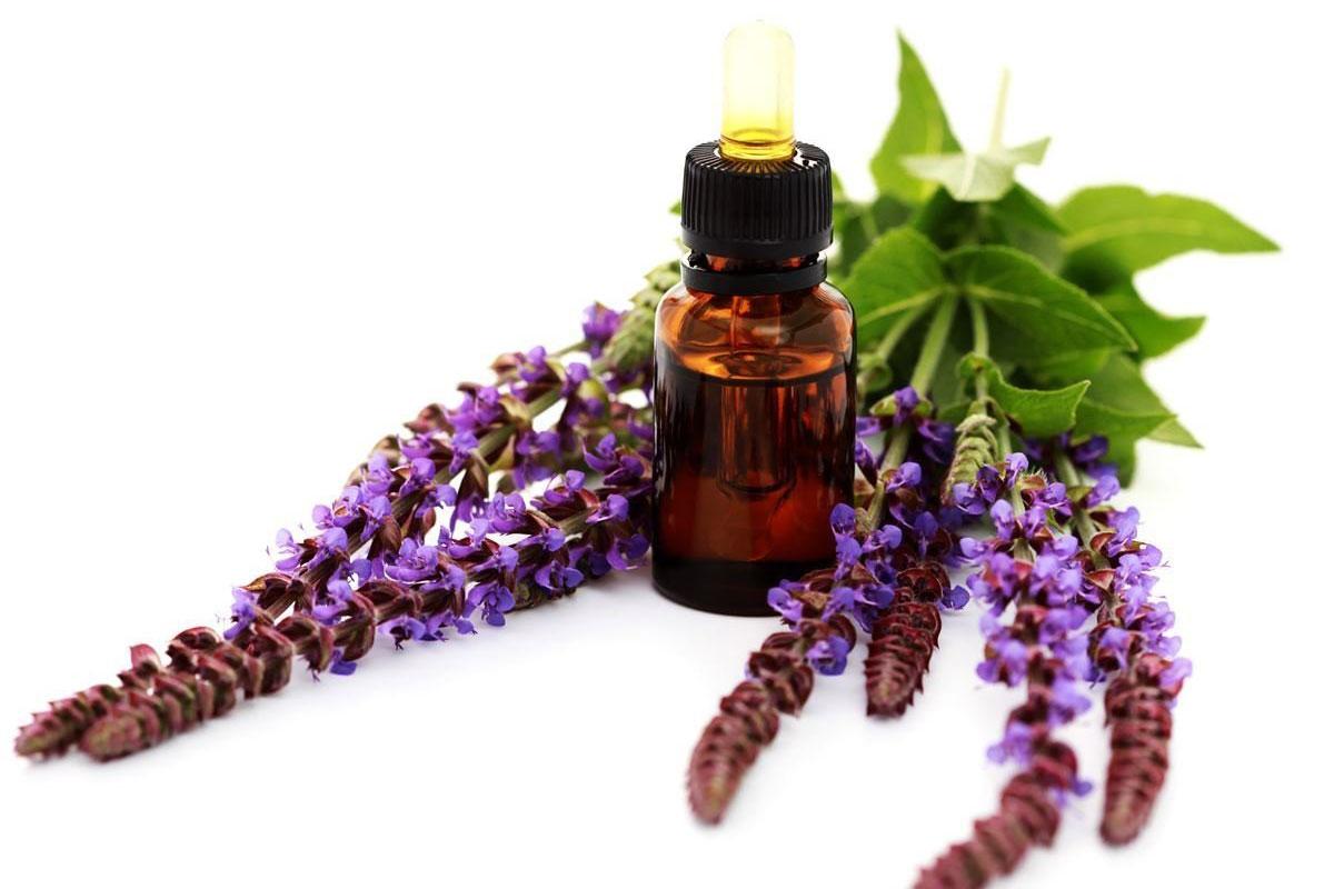 Эфирное масло шалфея: применение в медицине, косметологии и ароматерапии