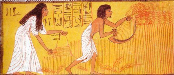 Выращивание льна в Древнем Египте