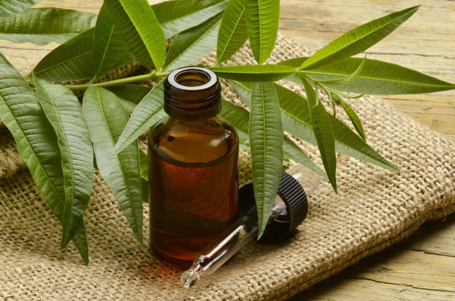 Масло чайного дерева для лица: свойства и применение