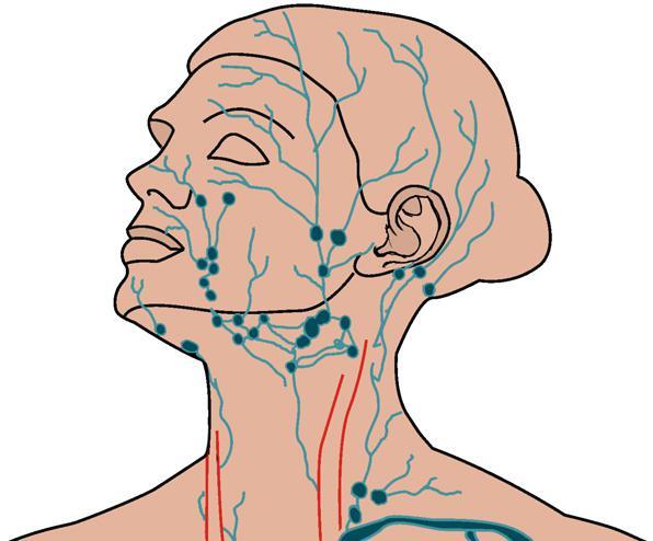 Лимфатическая система головы и лица