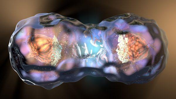 Митоз (деление) клетки