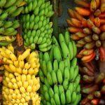 Связки бананов разных сортов