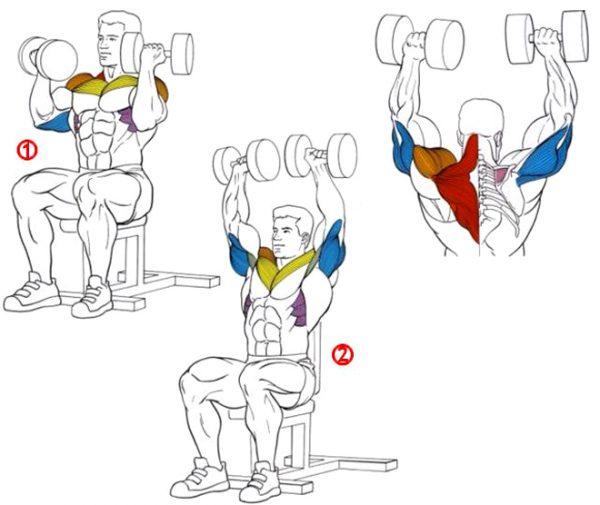 Упражнение «жим Арнольда»