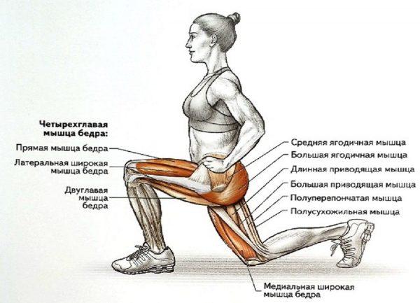 Какие мышцы работают при выпадах