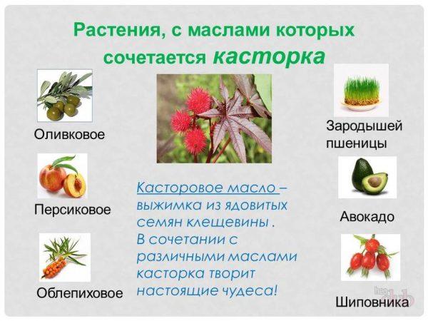 Сочетание касторового масла с другими видами
