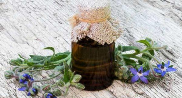 масло бораго (огуречника)