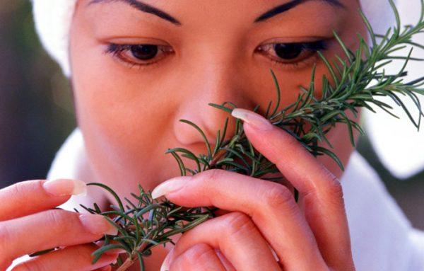 Девушка вдыхает аромат розмарина