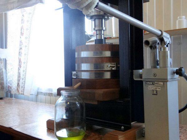 Производство кедрового масла