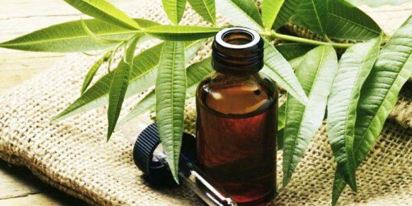 Эфир чайного дерева в тёмном флаконе и растение