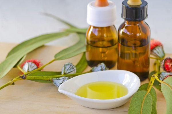 Эфирное масло эвкалипта в тёмных флаконах и растение