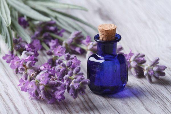 Эфирное масло лаванды в синем флаконе и растение
