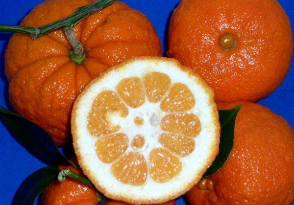 Плоды померанца