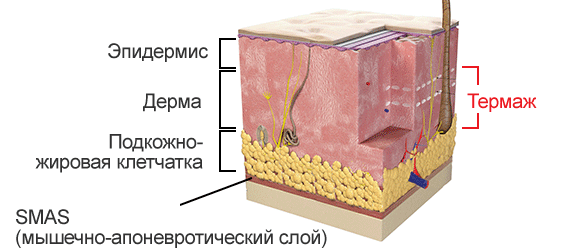 Схема строения тканей
