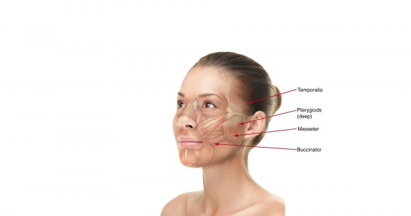 Схема строения мышц лица
